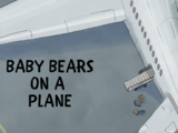 Baby Bears on a Plane/Gallery