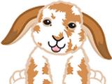 Signature Lop Bunny
