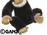 Signature Chimpanzee