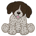Signature German Shorthaired Pointer