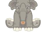 Signature Endangered Asian Elephant