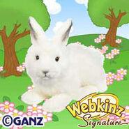 Signature Arctic Hare Plush Pet