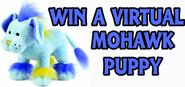Win a mohawk puppy