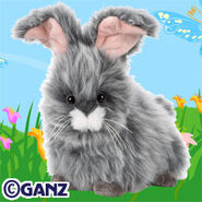 Angora bunny 2