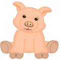Signature Pig