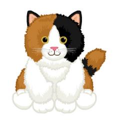 Signature Calico Cat