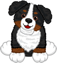 Signature Bernese Mountain Dog