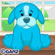 Preview aquamarine puppy