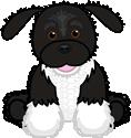 Signature Portuguese Water Dog