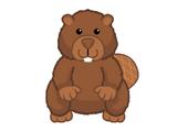 Beaver (2017)