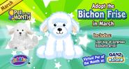 Bichon frise pet of the month