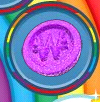 Purple Jelly Coin