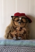 Weird owl jr