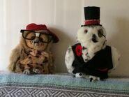 Weird owl jr and sr