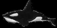 Orca Swim Closed NEW 05.png