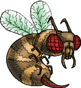 BeeWhole.png
