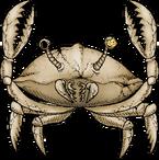 SkeletonCrab.png