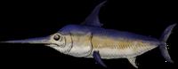 SwordFishWhole.png