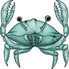 GhostCrabWhole.png