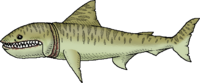 TigerSharkWhole.png
