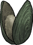 OysterWhole.png