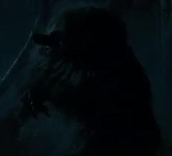 Will Blake Werewolf