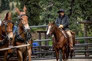Yellowstone - Stills - Characters - John Dutton 5