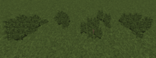JungleTallFern.png