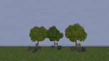 MangroveTreeS.png