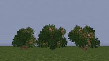 OleanderS.png