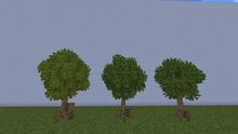 MangroveTreeM.png