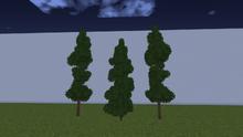 EvergreenNoSnowM.png