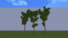 ForestMaple.png