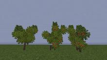 PomegranateS.png
