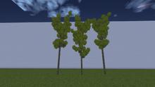 ForestAlder.png