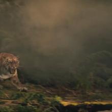 The raj bengal tiger attack.png
