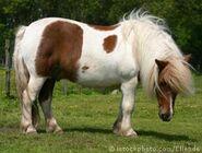 Pony 000001721724XSmall