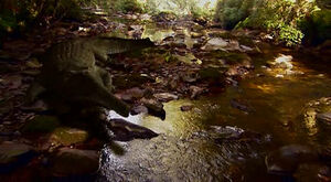 Rutiodon in creek.jpg
