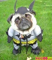 Bateman dog.jpg