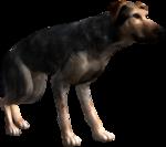 Alvin's dog
