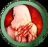 Odporność na krwawienie