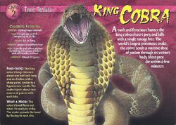 King Cobra front.jpg