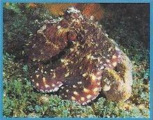 Giant Octopus 2.jpg