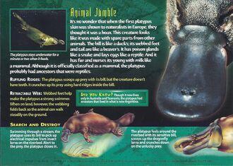 Platypus back