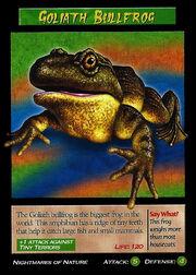 Goliath Bullfrog.jpg