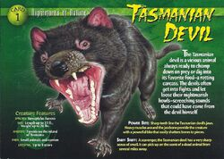 Tasmanian Devil front.jpg