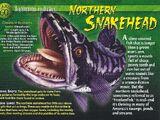 Northern Snakehead
