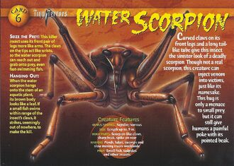 Water Scorpion front