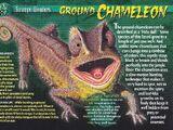 Ground Chameleon