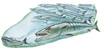 Barracudas 2